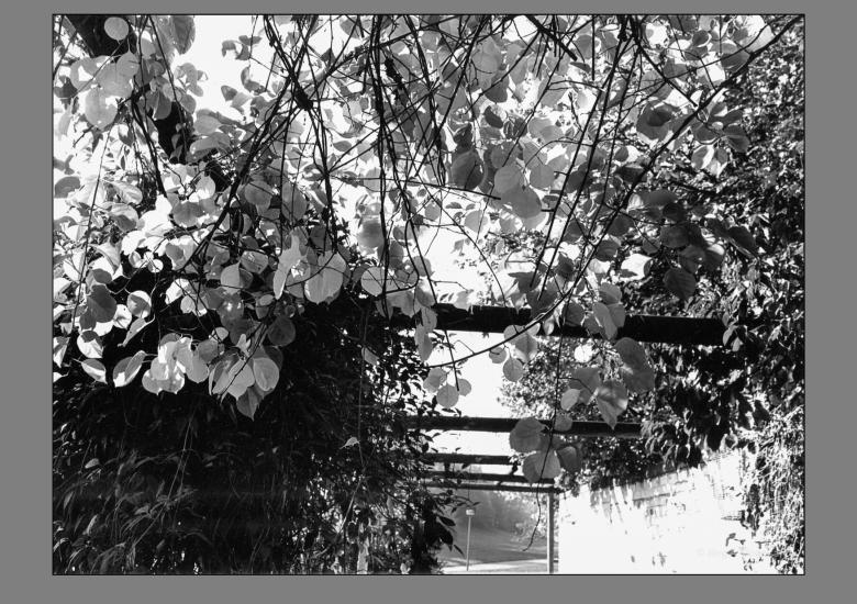 Klingenbachpark-09