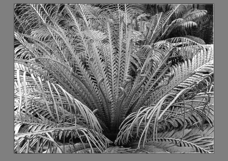 Pflanzenstudie-1