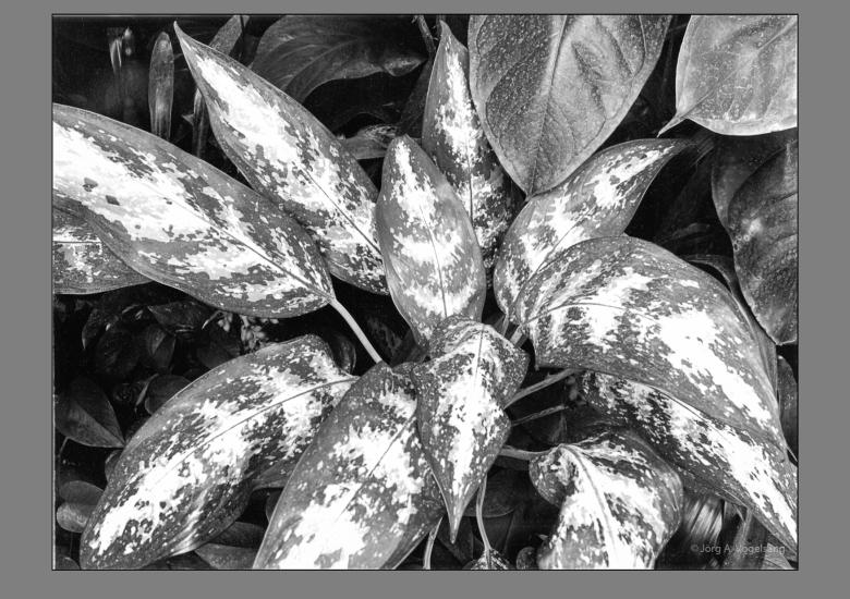 Pflanzenstudie-2