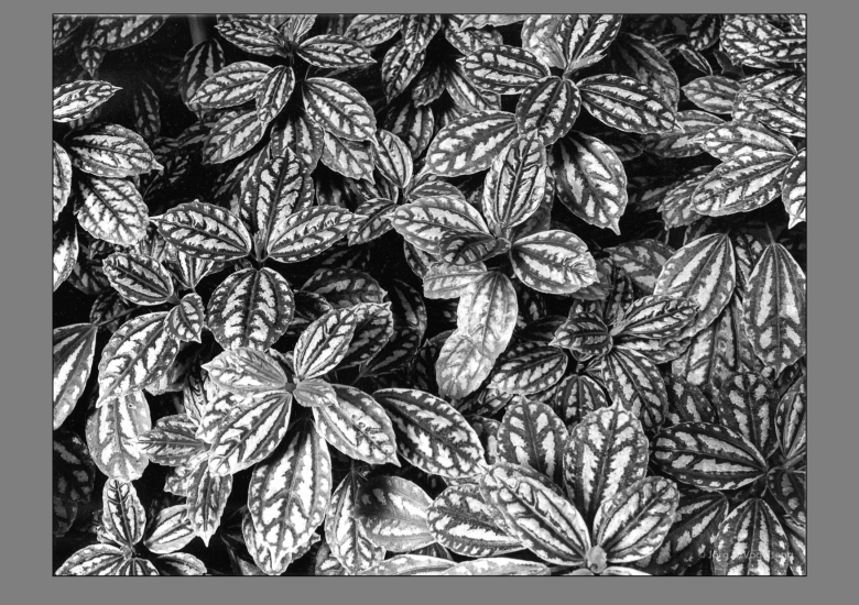 Pflanzenstudie-3