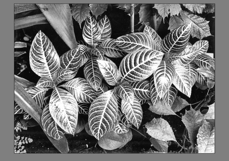 Pflanzenstudie-4