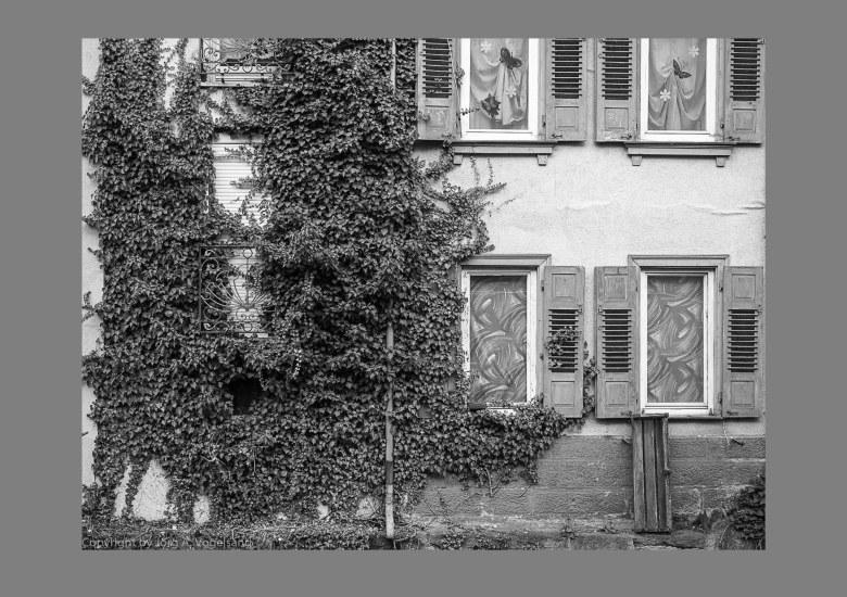 Kurschaden blog2-05